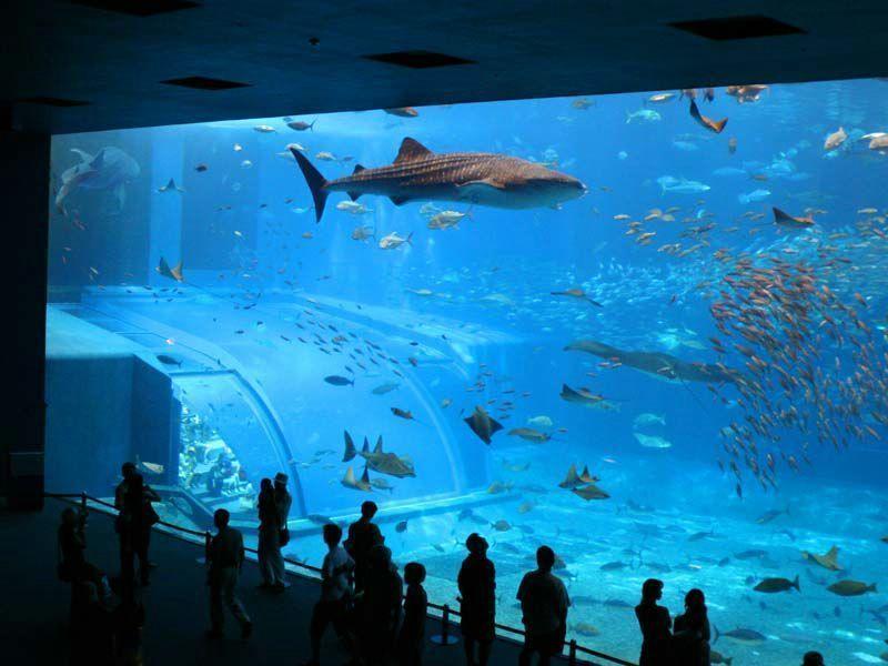 Aquarium for Fond aquarium